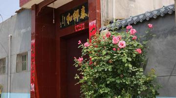 长安兴教寺村家家种花环境美