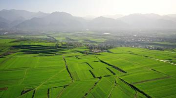 陕西长安:冬日小麦铺绿毯