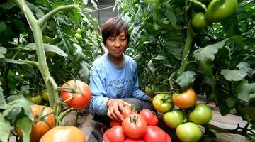 陕西靖边:现代农业促增收