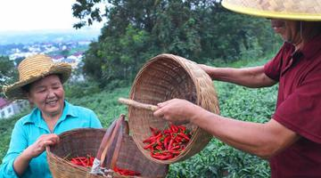 陕西洋县:扶贫协作显成效