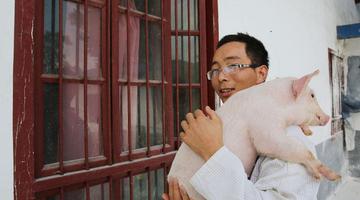 大学生返乡养猪 今年净赚40万