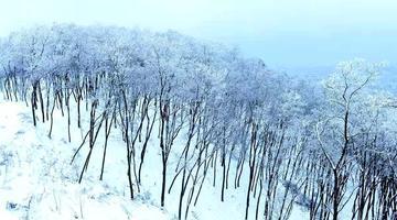 咸阳永寿县雪后槐山出现雾凇奇观