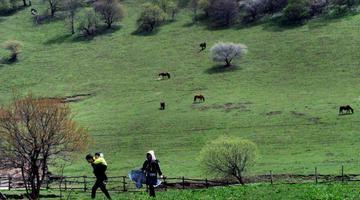 春风梳妆草原绿 遍野山花游人醉