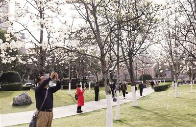 昨日,天气晴好,市民在公园赏春 本报记者 马昭 摄