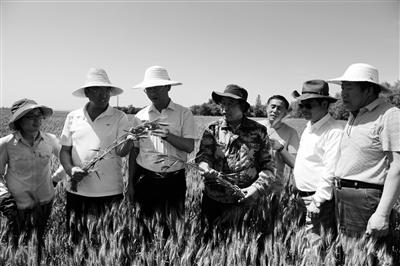 西农大小麦育种专家张正茂(左四)在甘肃平凉市传授农业技术