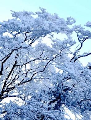 腊月初七 宁强县汉水源再现冰瀑雾凇