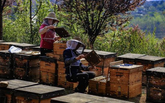 略阳县徐家坪社区群众发展养蜂产业走上致富路