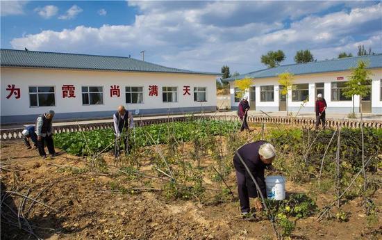 榆阳农村互助幸福院老人们劳逸结合,播种收获,提升老人们获得感