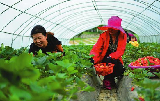 略阳县接官亭镇大力发展大棚种植业