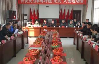 """长安举办草莓比武大会  """"红火事业""""成为百姓致富的""""开心果"""