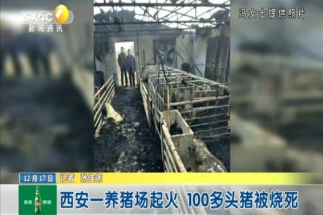 西安一养猪场起火 100多头猪被烧死