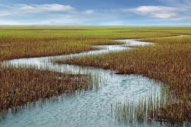 红碱淖获批国家级自然保护区 哺育着26种国家级珍禽