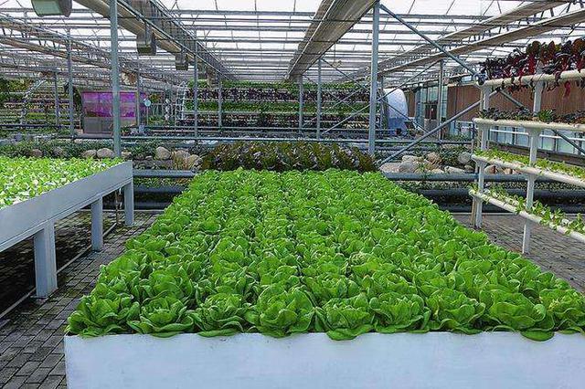 西安去年农业增加值312.46亿元