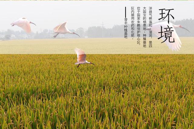汉中农业经济2017年增速居陕西省第一