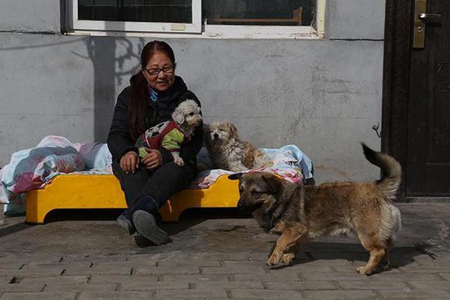 西安女子救助流浪狗13年 历经坎坷饱受非议