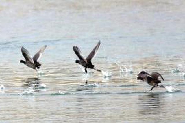 城固:春节期间加强栖息地巡护监测 确保候鸟安全