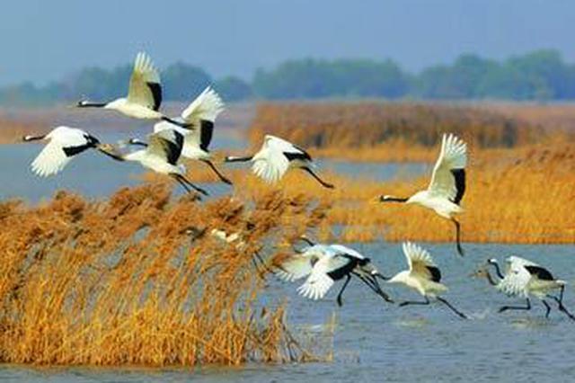春节期间城固加强栖息地巡护监测 确保候鸟安全