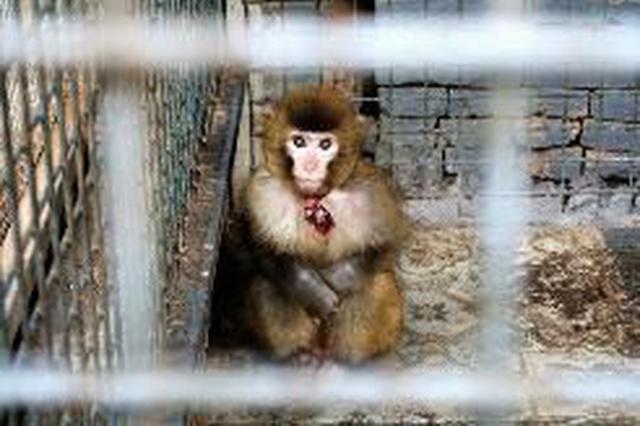 """美食城里竟藏小型""""动物园"""" 林业部门:已开始调查"""