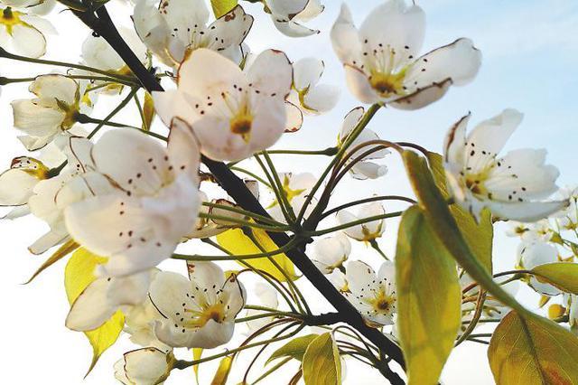 东风随春归发我枝上花 西安周边踏青赏花攻略