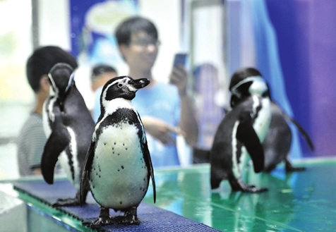 苏州白马涧龙池景区企鹅科普馆正式开张