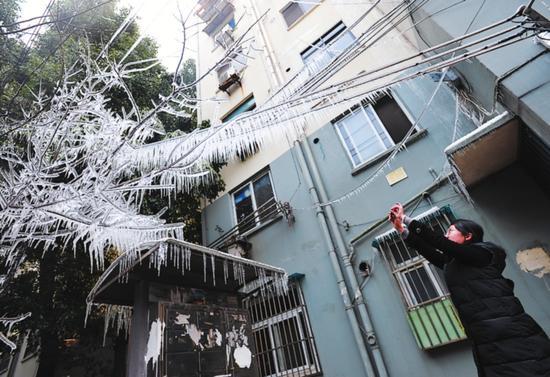 昨日,虎丘街道新庄社区一居民楼下,出现了一棵挂满冰凌的树,景象极为奇特,引得附近居民们争相来观赏、拍摄。原是一户居民家中水管爆裂漏水所致。记者 张健摄
