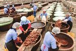 百斤鲜萝卜只出9斤成品 甪直萝卜干传承180年的苏州味道