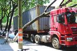 集装箱货车带倒行道树 大树遭飞来横祸根系断裂