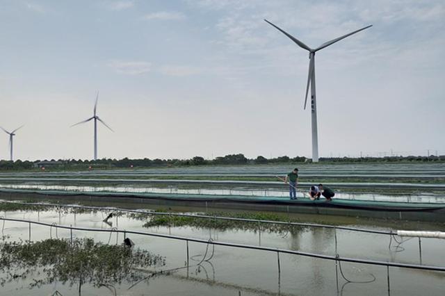 生态良田蟹肥水美 苏州渔业生态建设成效显著