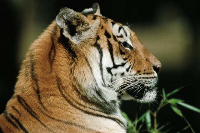 苏州数年最大野生动物非法买卖案开庭