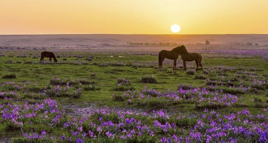 迷人的鄂尔多斯草原景观