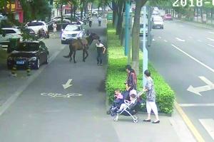 马儿在非机动车道上 交警供图