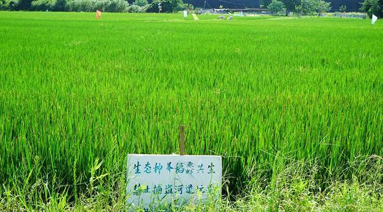 黄埭高新区三埂村的顾德宝的立体种养基地
