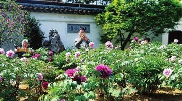网师园牡丹园正姹紫嫣红