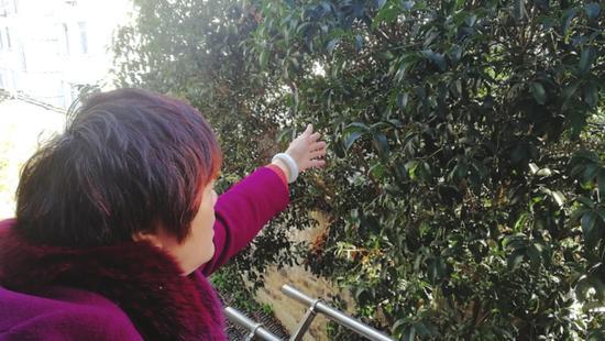 施阿姨从阳台上伸手就能碰到树叶施阿姨从阳台上伸手就能碰到树叶