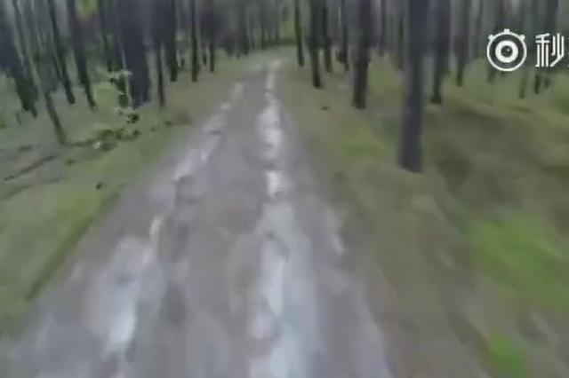 林间路上碰到熊的区别
