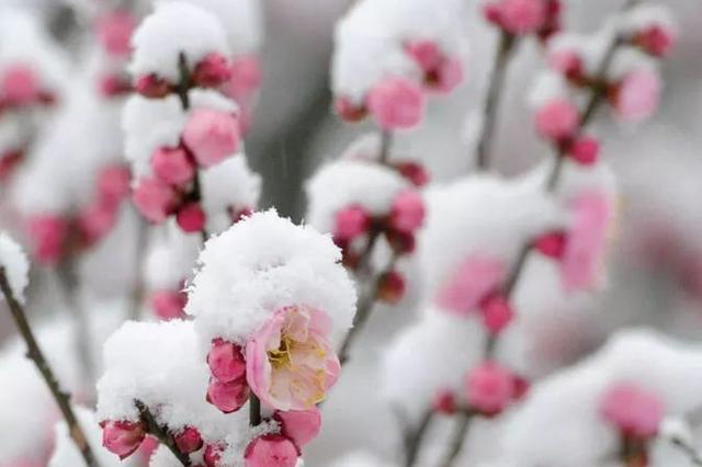 """苏州气温比常年偏低 """"冷五九""""气象记录上少见"""