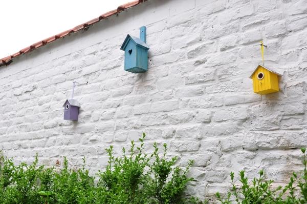 住宅屋顶小改进 给鸟儿一个安全的栖身之地