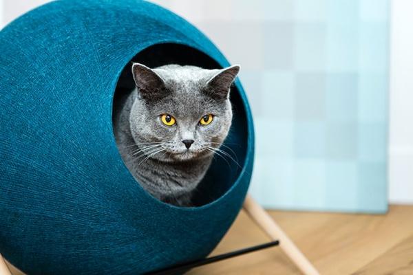 猫咪家具再推新品 无缝融入极简室内环境
