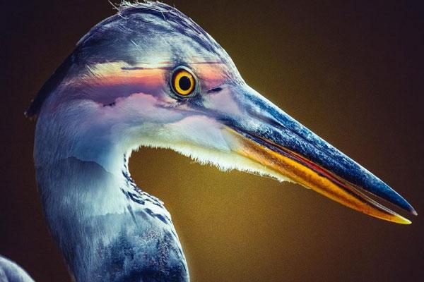 取材于动物世界的奇幻照片 动物与梦幻的多重曝光