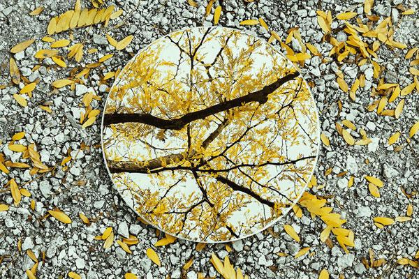 一镜知四季 唯美风创意构图你学会了吗?