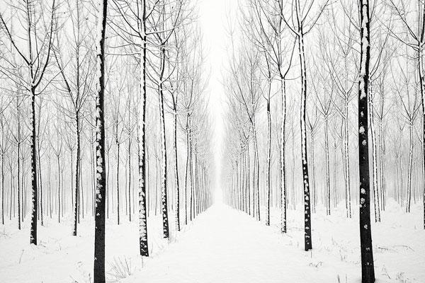 黑白丛林之间的静谧 雪景与森林的简约组合