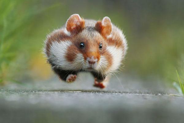 动物世界萌新三剑客 野生动物世界的卖萌时刻