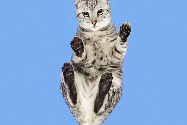 毫无隐私的精彩猫片 直观感受猫咪?#30446;?#29233;肉垫