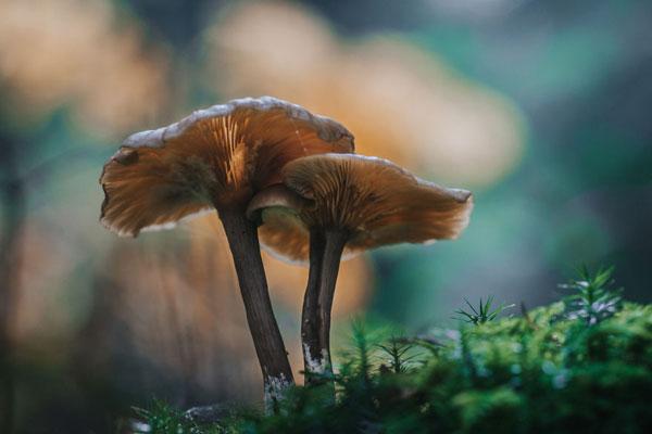 丛林中的?#21442;?#31934;灵 灵巧可爱的野生菌类
