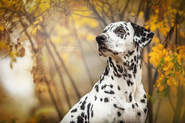 静如处子动如脱兔般的狗狗 汪星人的唯美写真