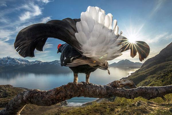 2019年Big Picture自然世界摄影大赛获奖作品欣赏