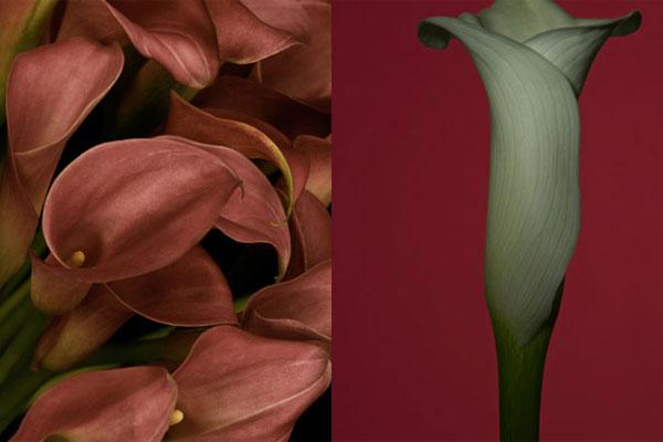 花朵寄托缅怀与慰藉 淡雅画面中的悲伤挽歌