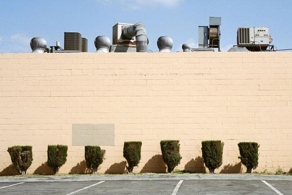 极简视角寻找城市空间 奇怪植物装扮都市一角