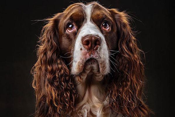 憨态可掬 国家地理摄影师镜头下的狗子