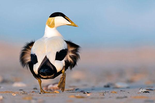 自然的奇迹 惊艳你眼球的20张鸟类摄影